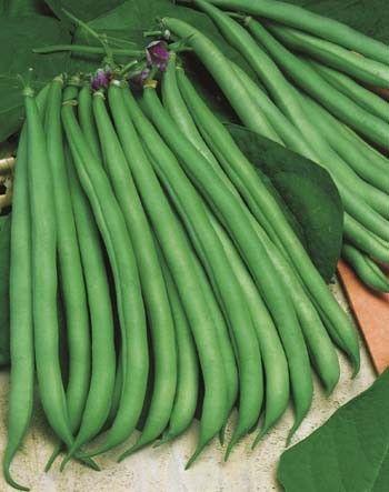 Bean Dwarf Banjo Examples Of Vegetables Pea Beans Bean Seeds