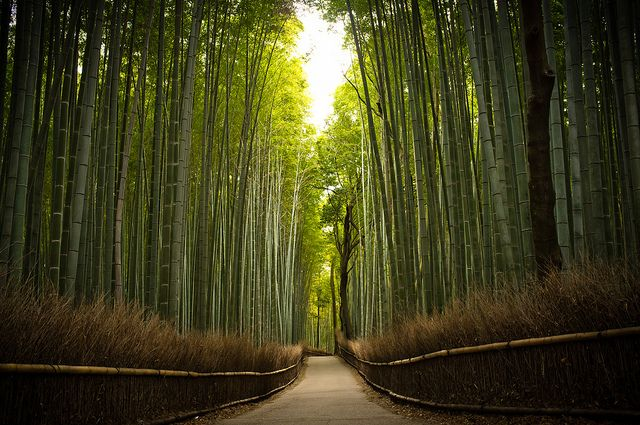 path of bamboo, Japan
