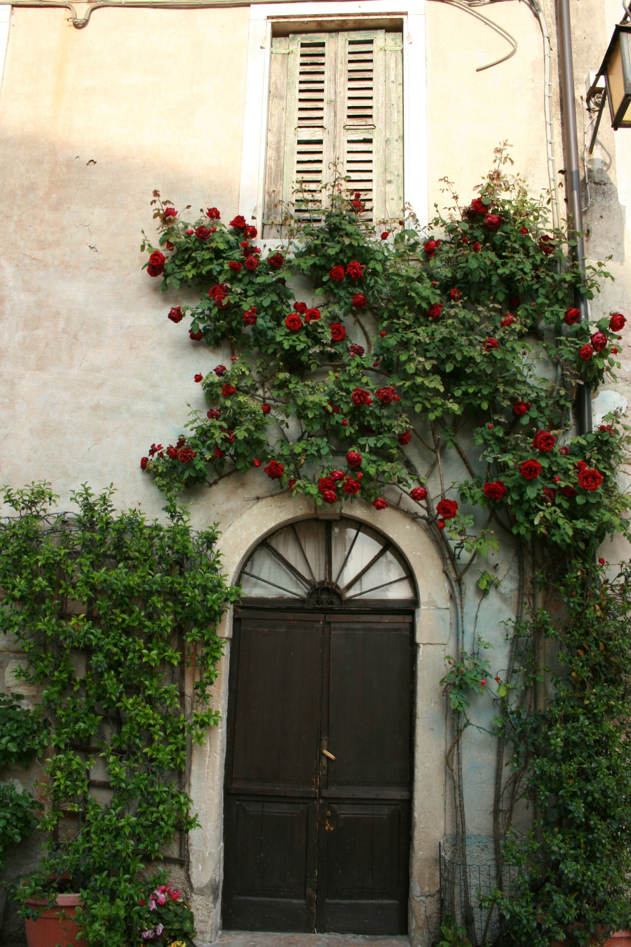 house and roses