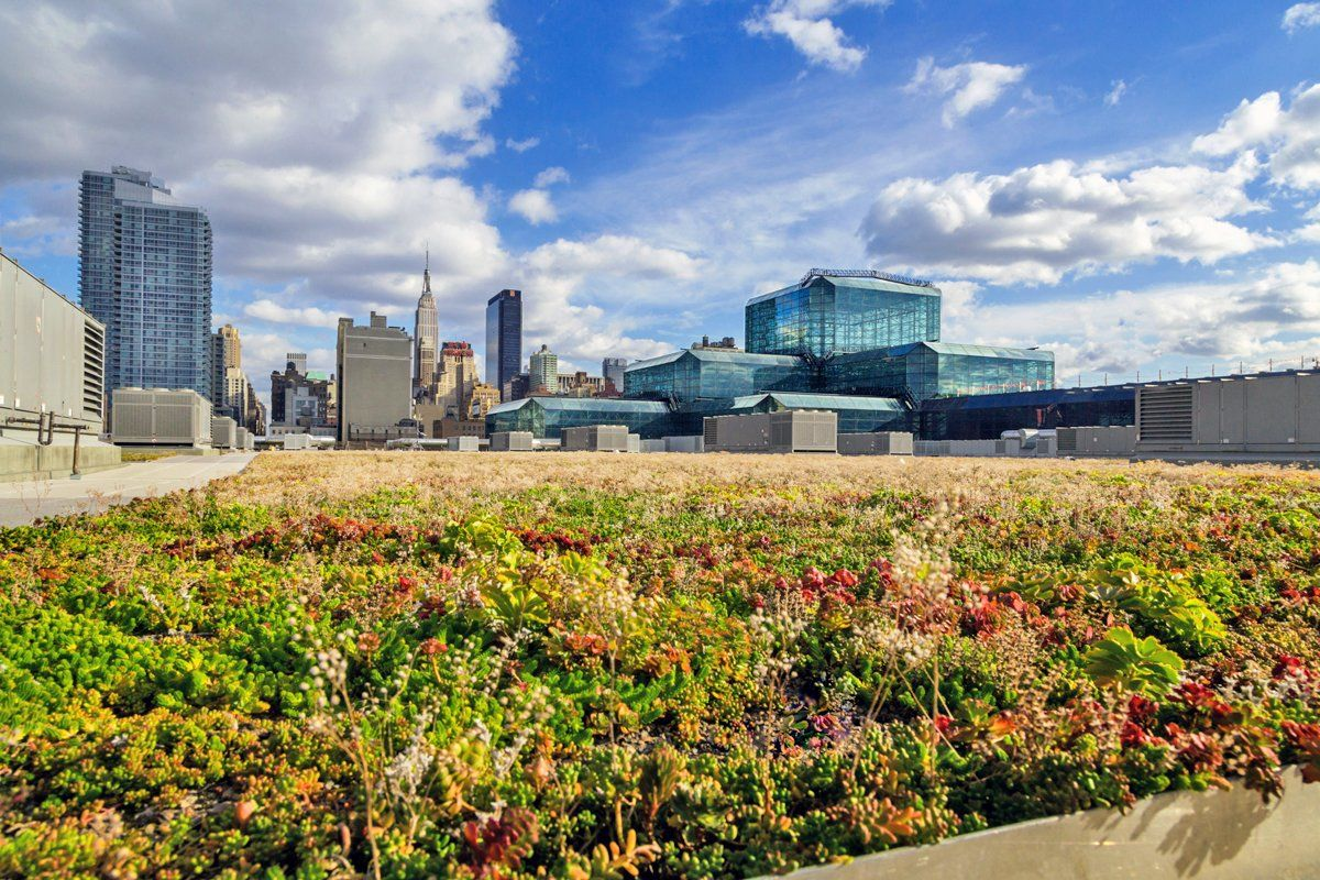 New York City Passes Law Requiring Green Roofs On New Buildings Green Roof City Pass Green Roof System