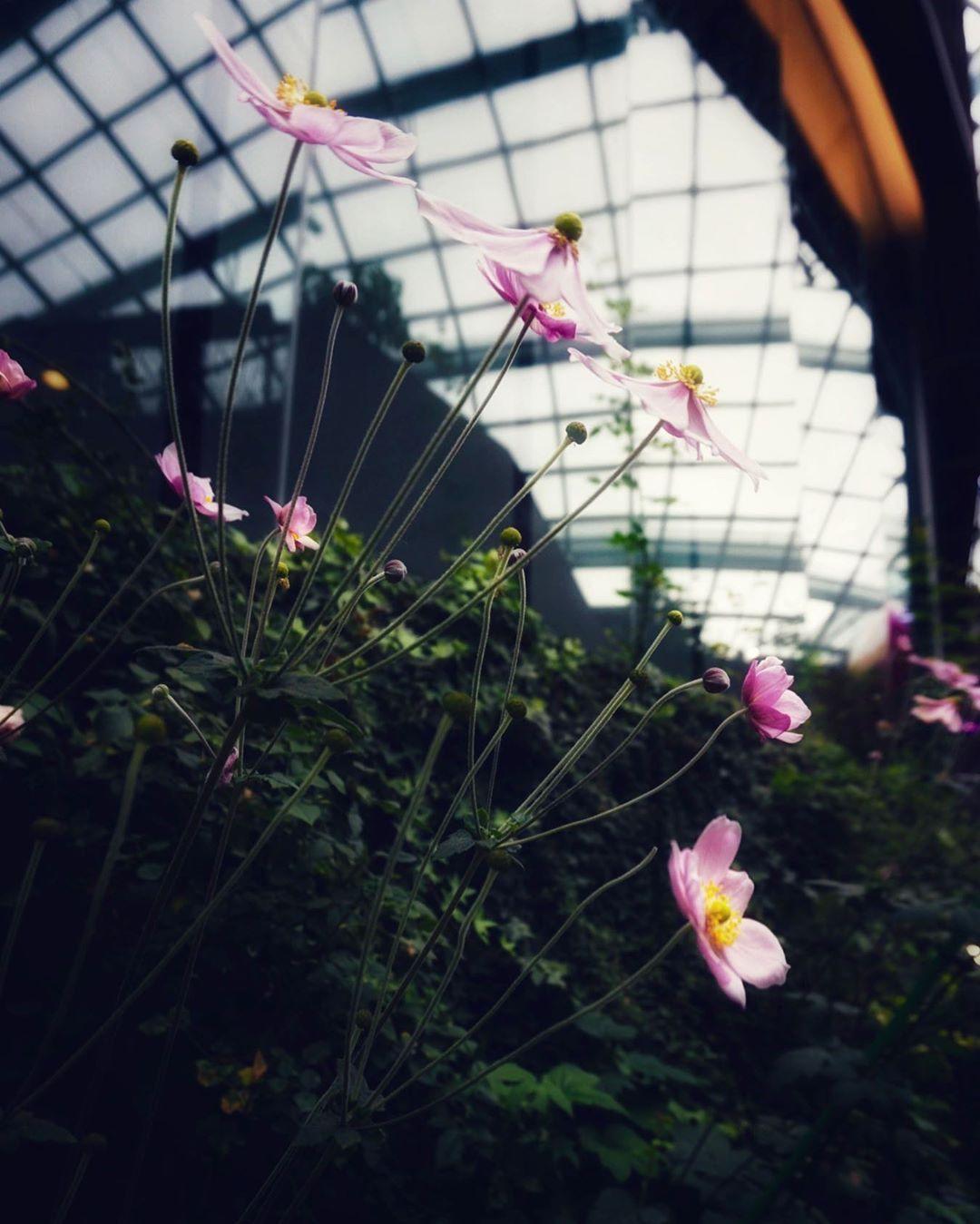Be Always Blooming Flower