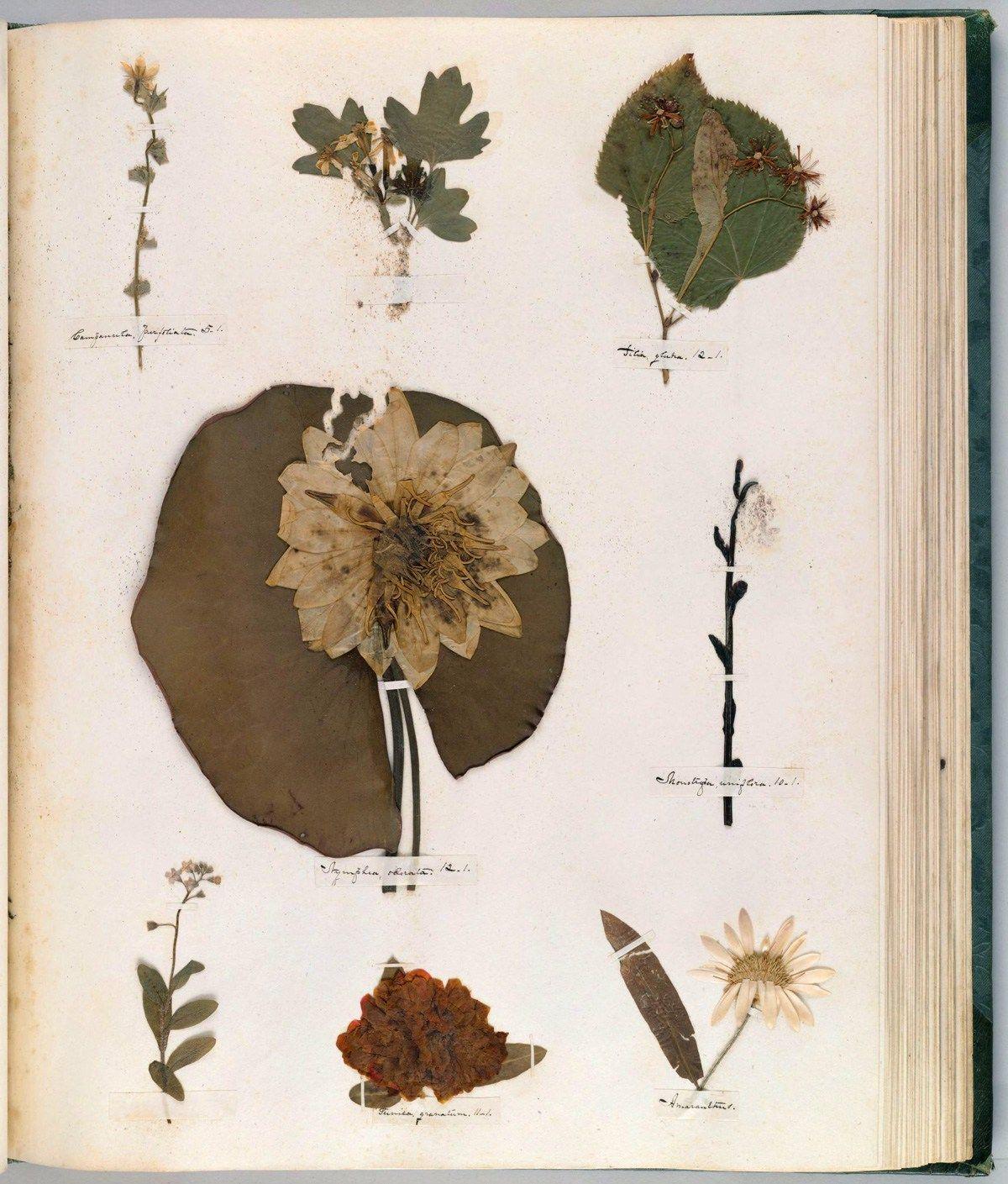 「emily dickinson herb」の画像検索結果
