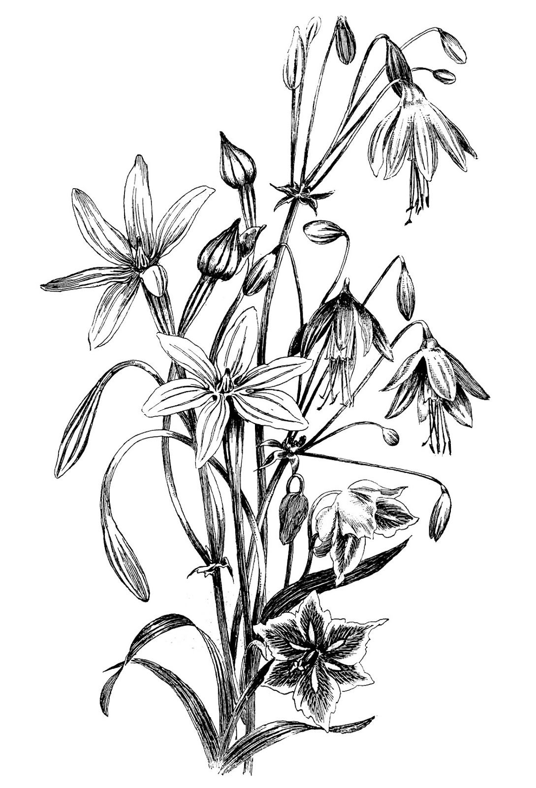 black and white floral drawing floral drawing graphics fairy