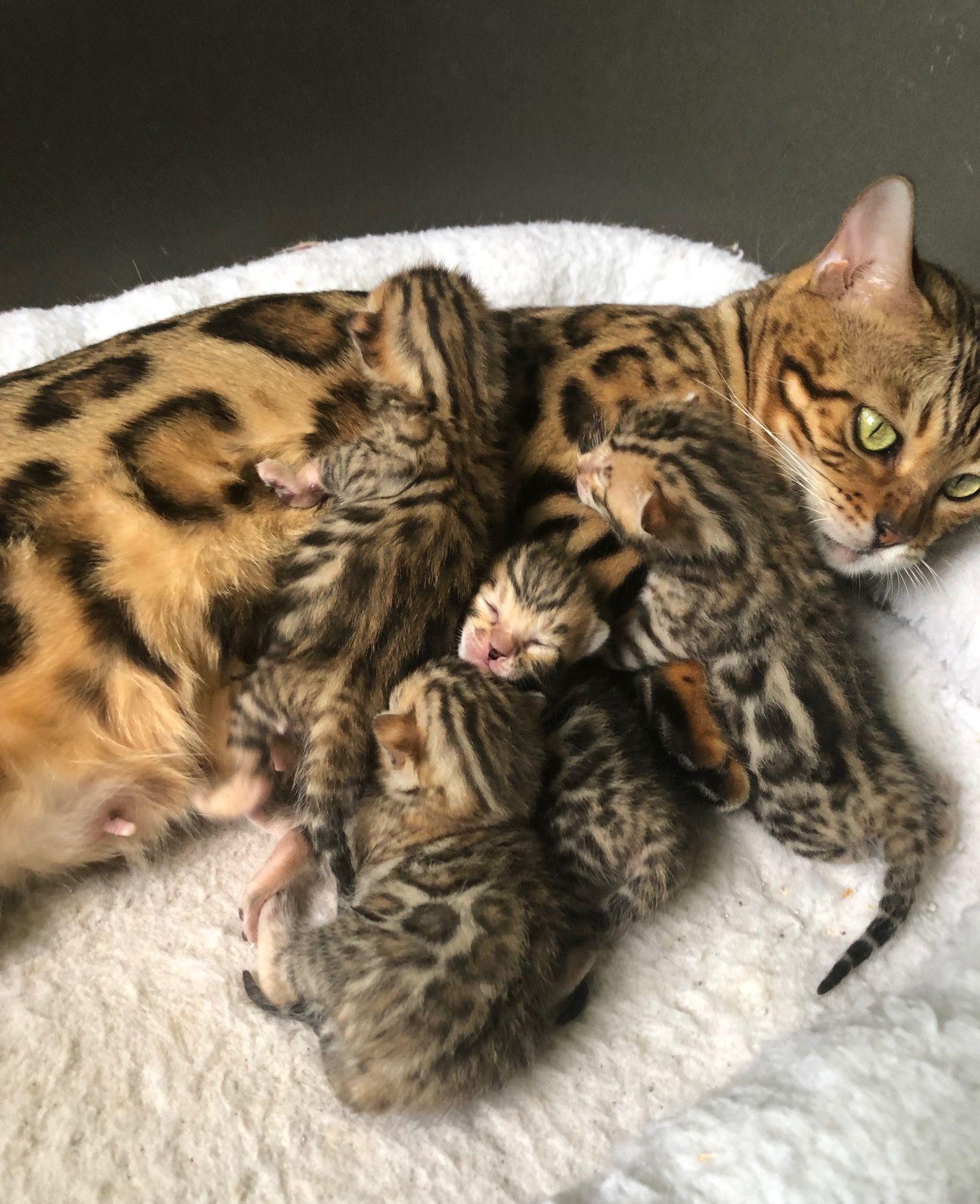 kitten. in 2020 Kittens, Pets, Animals