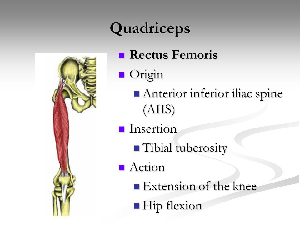 Image Result For Flexors Of The Knee Tibial Insertion Anatomy