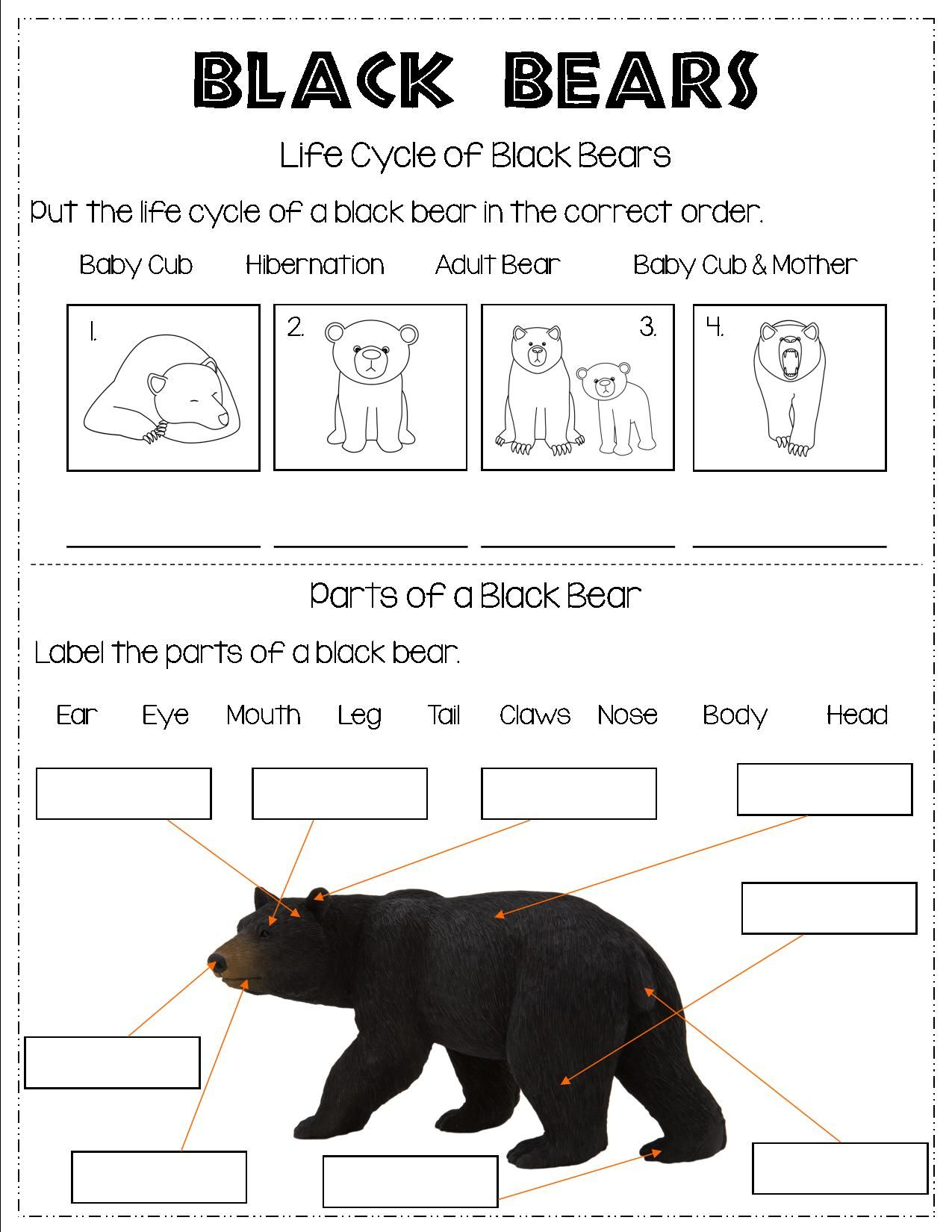 small resolution of All About Black Bears in 2021   Mammals
