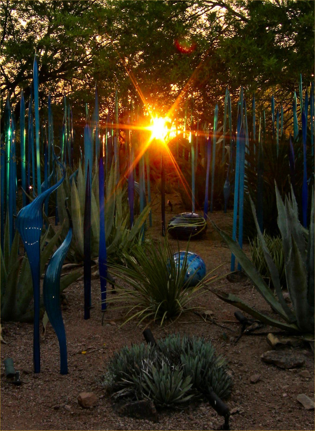 Chihuly exhibit in Desert Botanical Garden, lucky enough to be ...