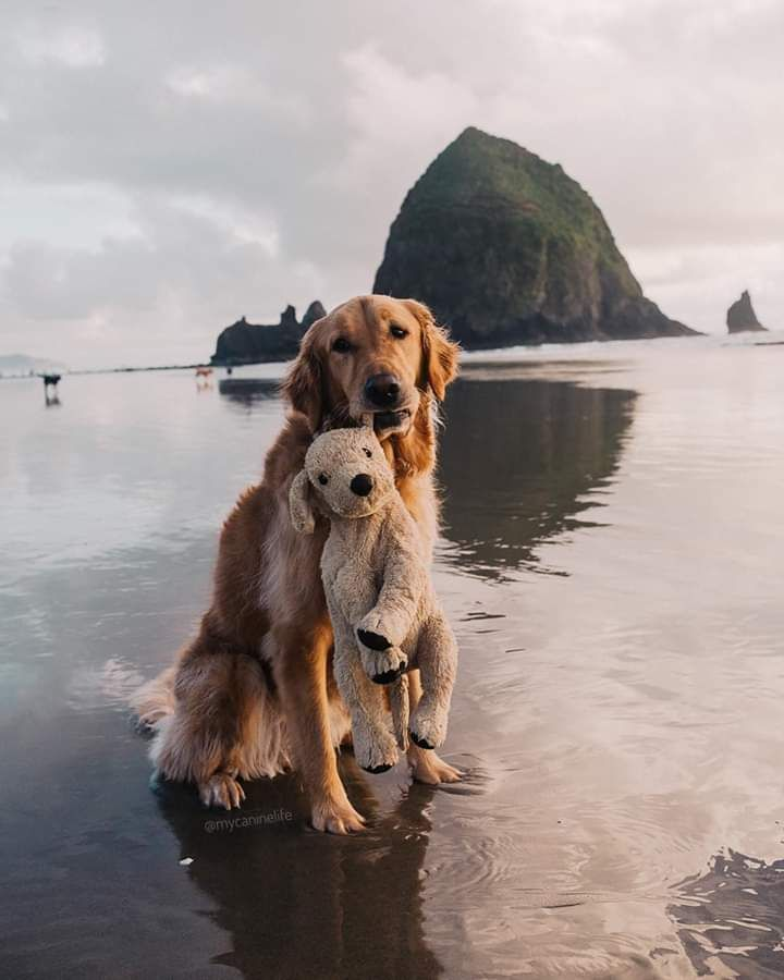 Cannon Beach Oregon United States cute   Puppy   Dog   animal   pets #dogsphotography