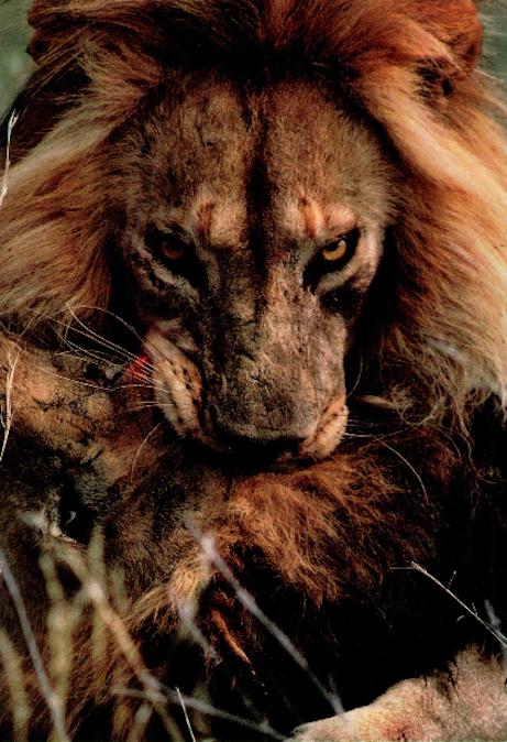 Scary Animals Beautiful Animals Animals Wild