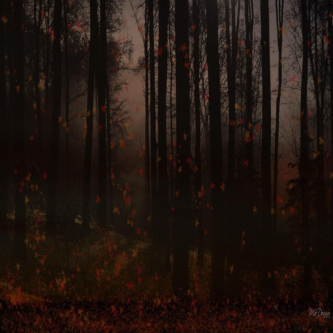 Forest At Dusk Wallpaper