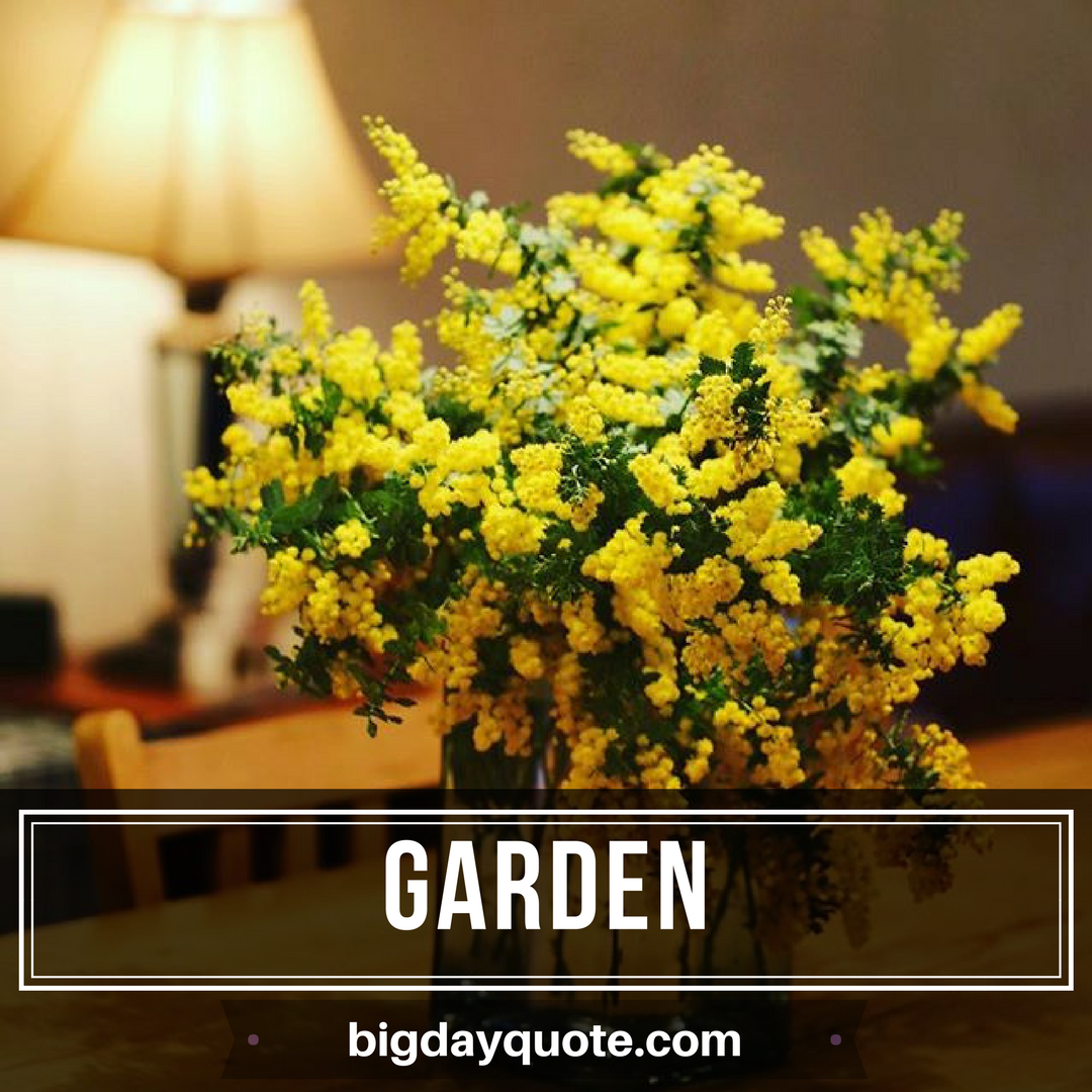 Pin by BigDay Quote on Garden II Bigdayquote Plants, Garden