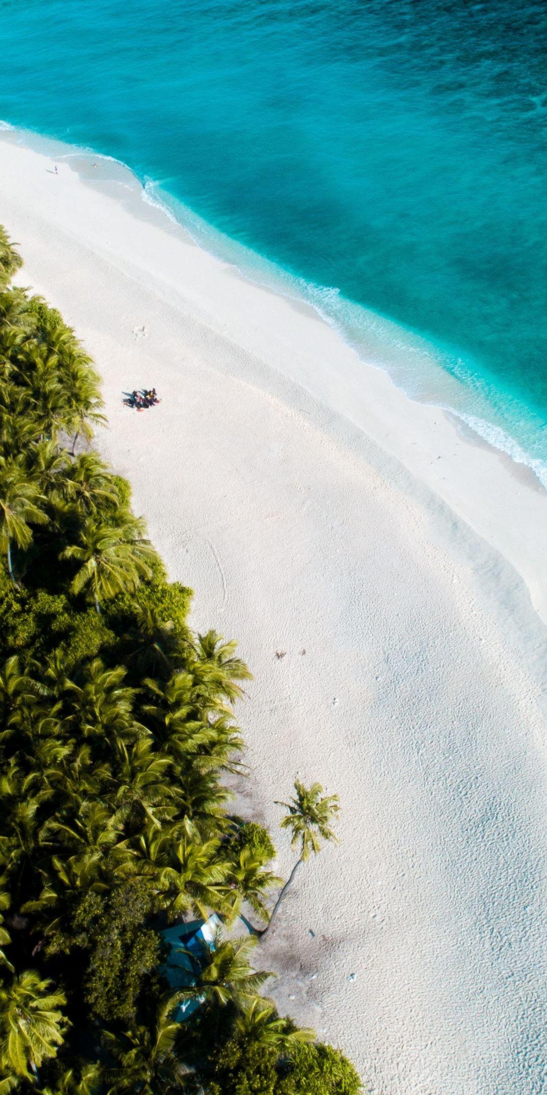 Beautiful Beaches Palms Maldives Wallpaper Plyazhnye Foto