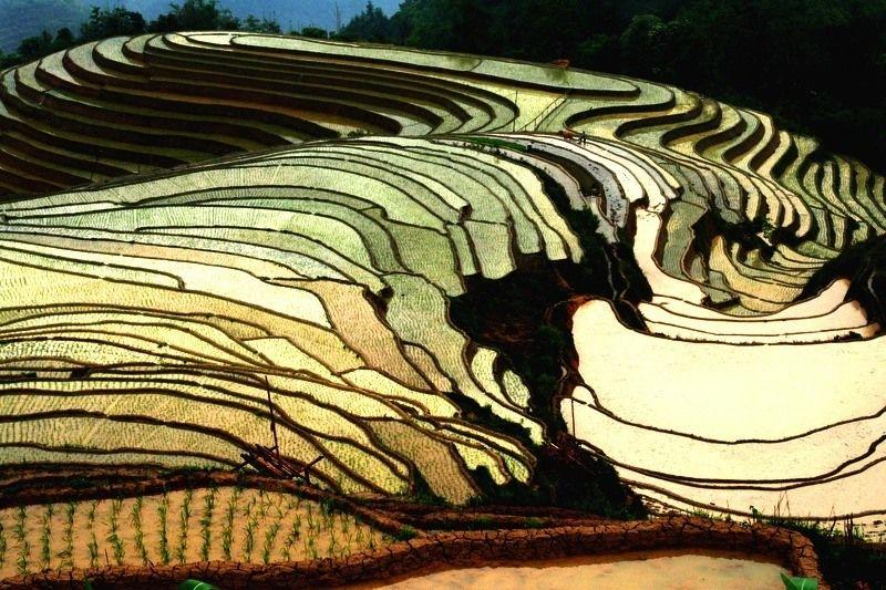 Terrazas De Yunnan China Arroz Paisajes Texturas