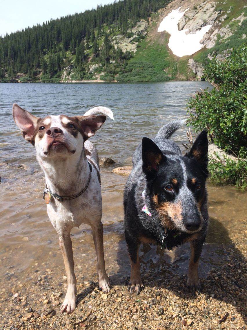 Sawyer And Suelu Love The Lake Stmarysglacier Colorado Red