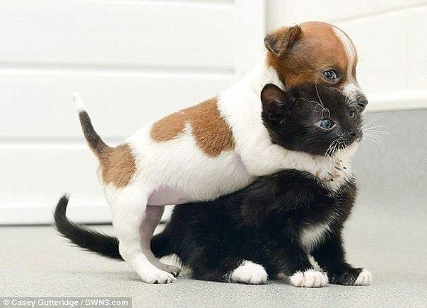 Black cat and white puppy playing together.. #kitten # ...