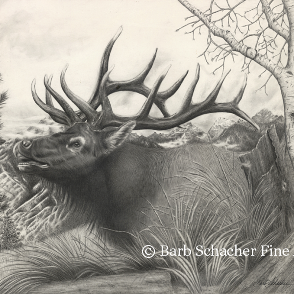 Majestic Bull Elk Pencil Drawing Print At Www Barbspencilart Com