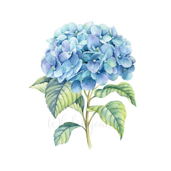 Watercolor Flower Printable Blue Hydrangea Print Hydrangea Etsy Hydrangea Wall Art Watercolor Painting Etsy Watercolor Flowers