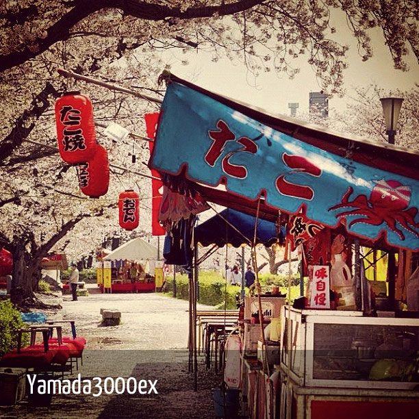 """""""#sakura 3 たこ"""" @Yamada3000ex"""