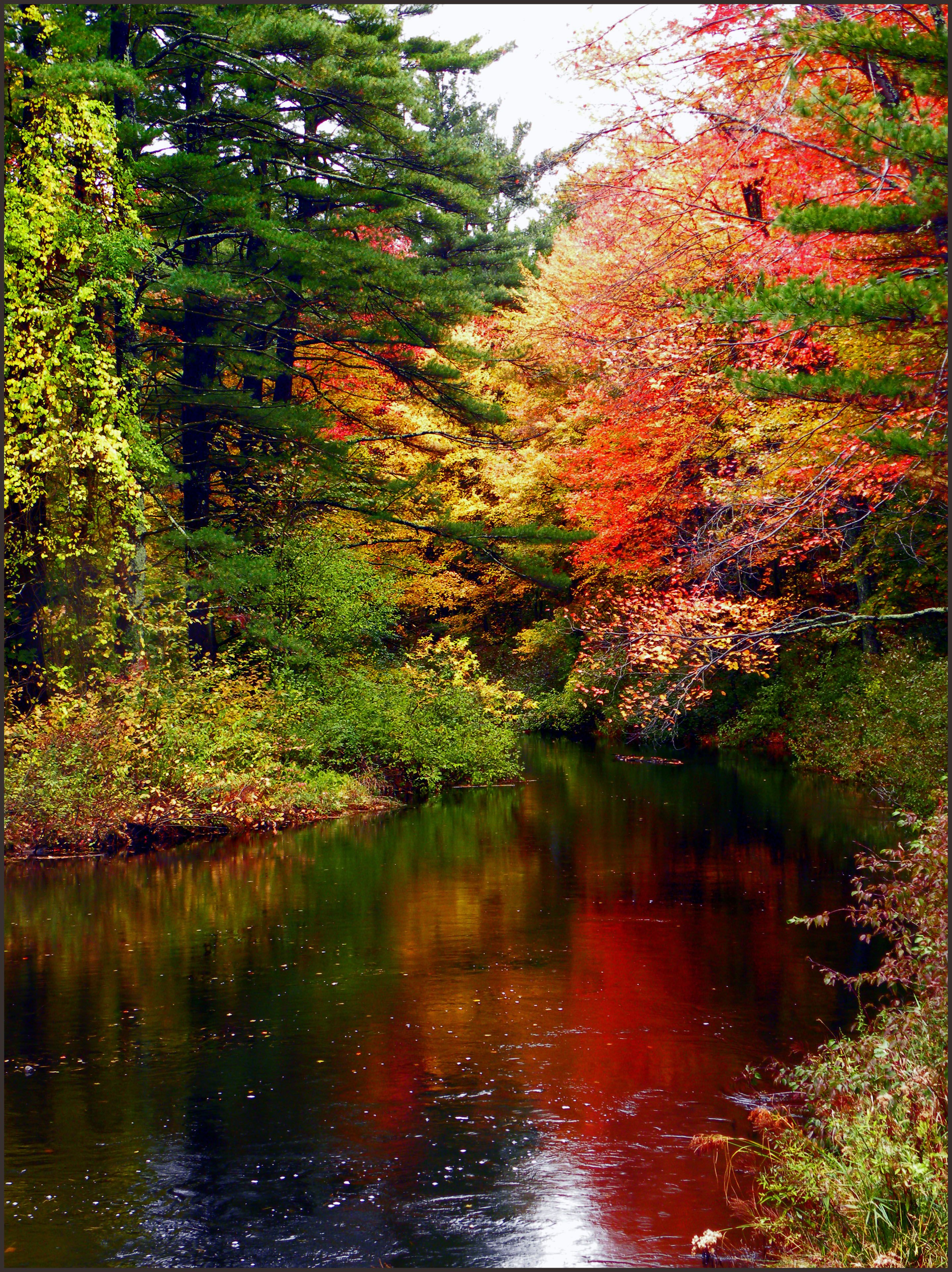 Beautiful Autumn River Autumn Forest River Nature Leaves Red Yellow Green Spruce Woods Love Landscape Photos Autumn Scenery Autumn Scenes Landscape