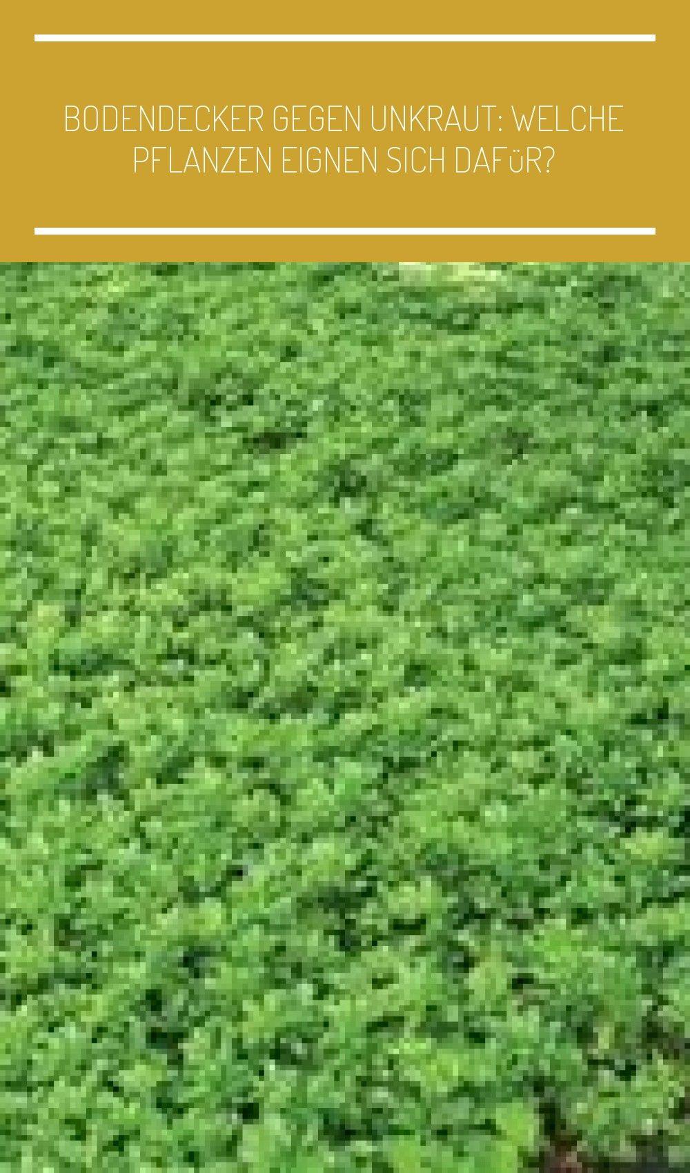 Immergrune Bodendecker Ideen Im Garten Garten Landschaftsbau Zaun Bodendecker Gegen Unkraut Welche Pflanzen Eignen Sich Dafur En 2020