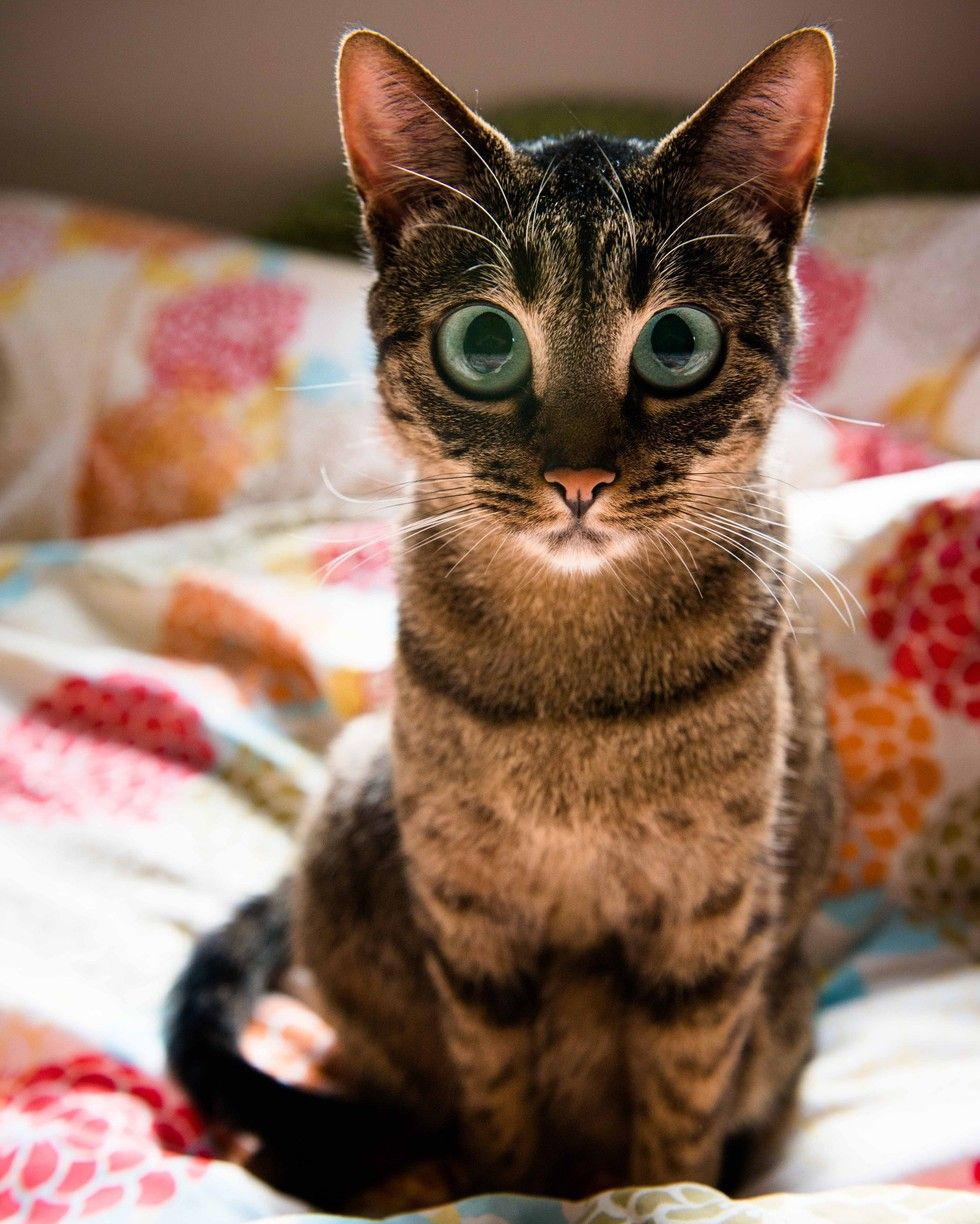 13 Cats Who Know More Than You Do About Everything Kittens Cutest Super Cute Kittens Cats Kittens
