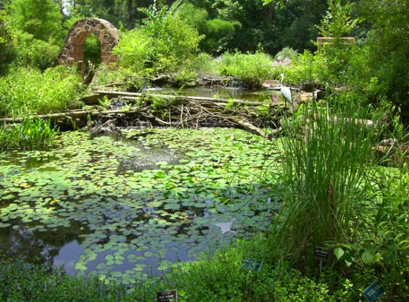 Mercer Arboretum And Botanic Gardens Pack A Picnic And Take The Family To Explore The