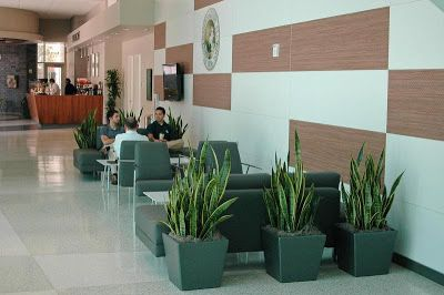 decorative plants for office. Indoor Plants In Lobby | Office Decor Ideas Pinterest Lobbies, And Decorative For