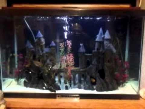 Harry Potter Fish Tanks Google Search Fish Tank Harry Potter Tanks Fish