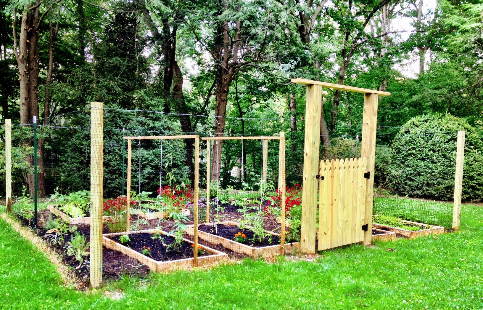 Deer Fence Gate raised beds Exactly what I want Gardening