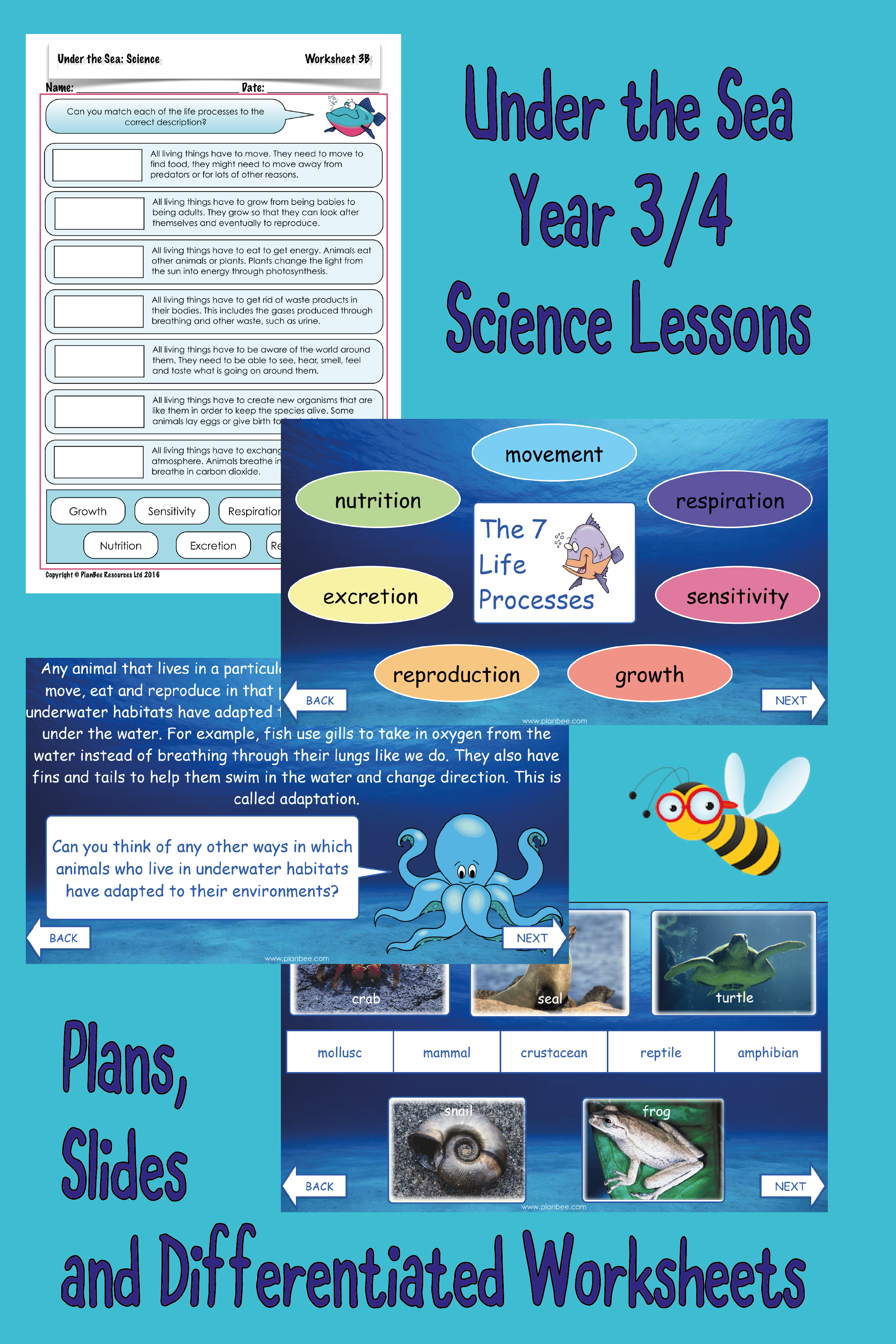 Under the Sea All SCIENCE Lessons in Topic Science lessons