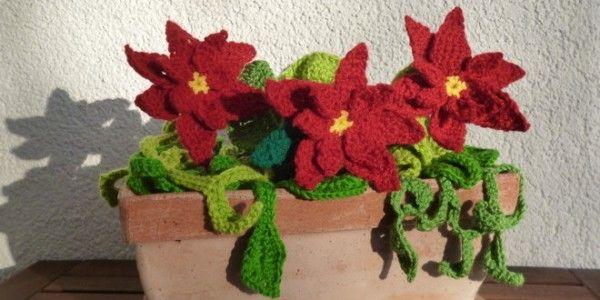 Nachdem die Petunien nun wirklich nicht mehr zur Jahreszeit passen habe ich meinen pflegeleichten Blumenkasten aktualisiert und mit Weihnachtssternen bestückt.
