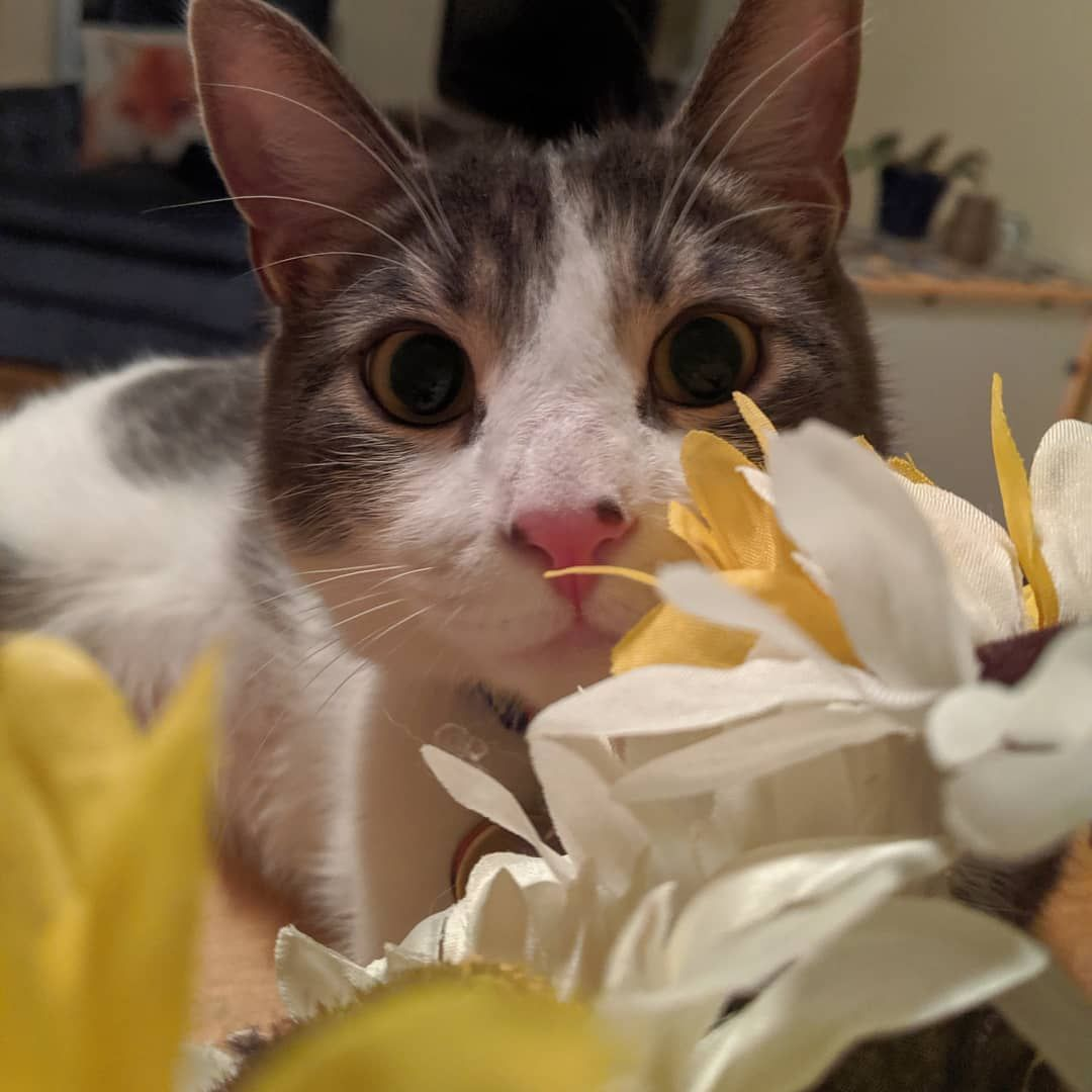 Looking Cute Amongst The Flowers Is Perhaps Only A Small Amount More Preferable Than Trying To Eat Them Catsofins Cat Life Cat Lovers Cats Of Instagram