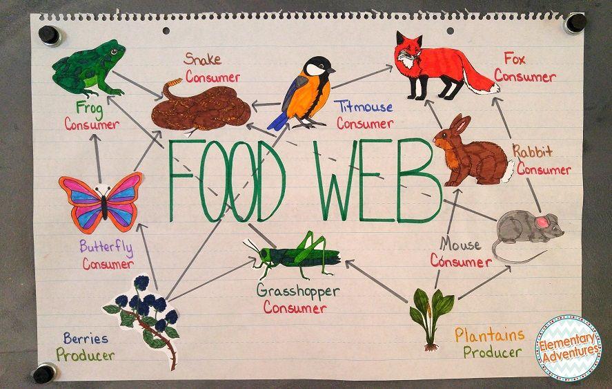Food Chain And Food Web Similarities