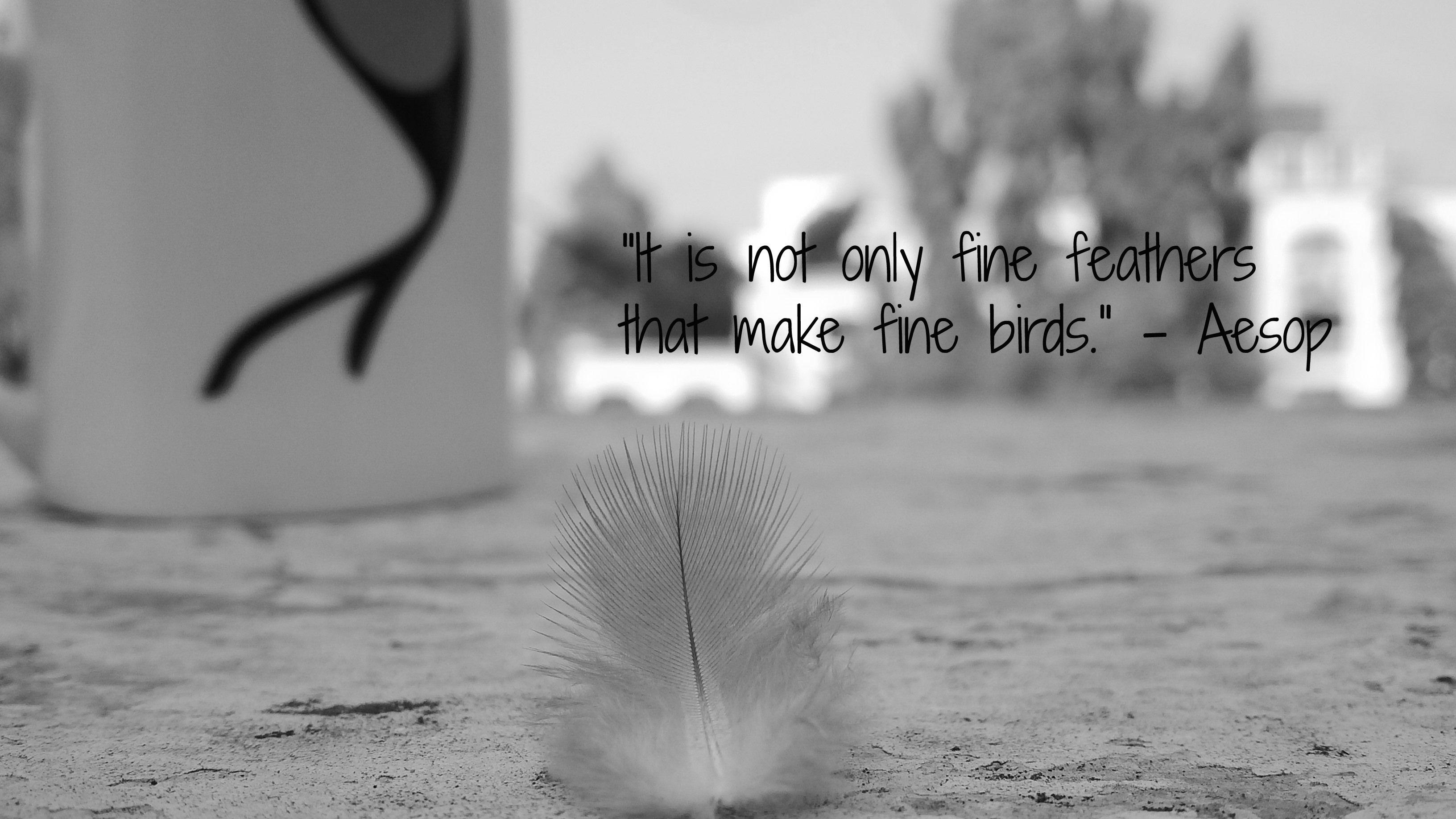Feather Quotes   Random clicks! [www flickr com/kaushalyadav