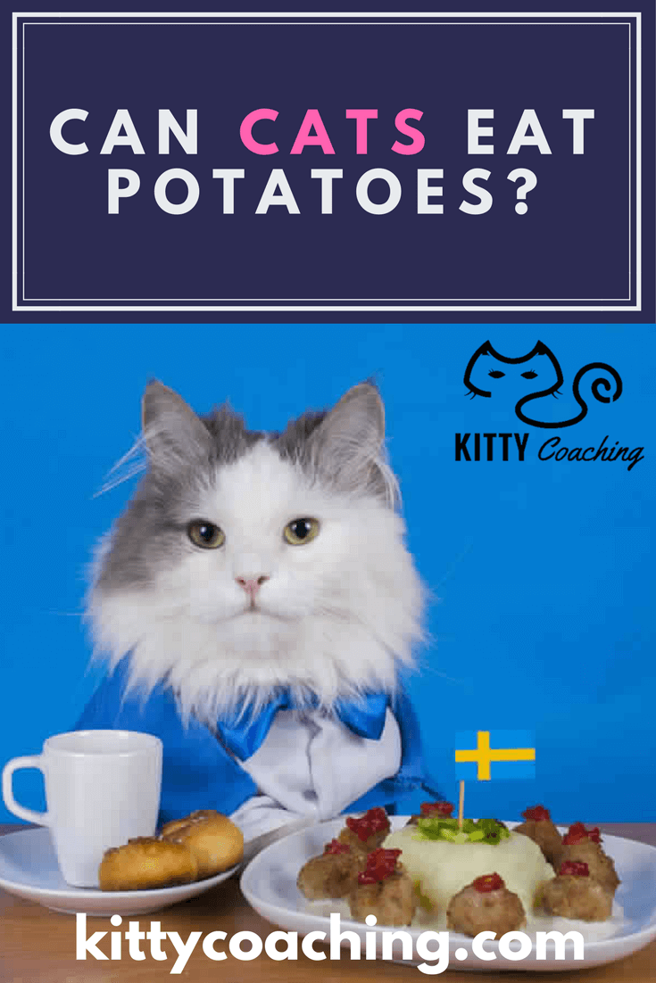 Can Cats Eat Sweet Potatoes? What About Chocolate? (2018