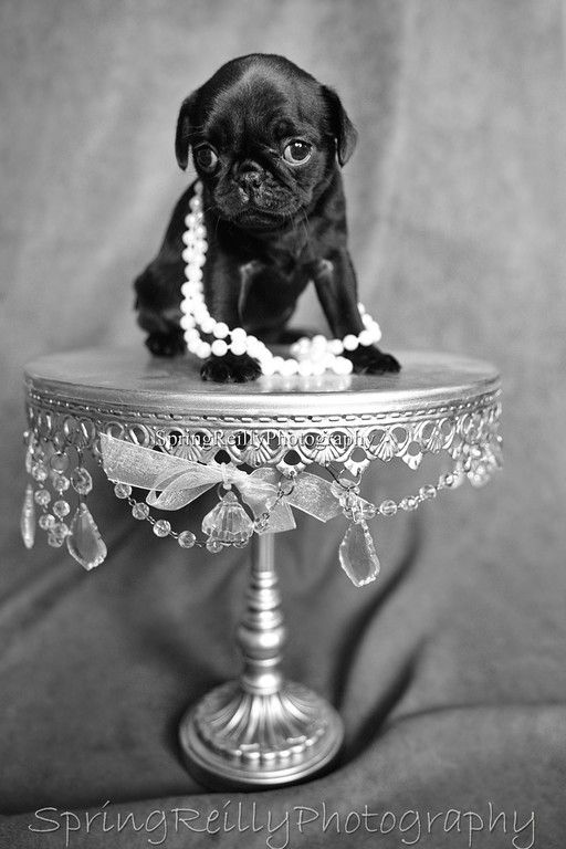 Pet Portrait Sessions By Life S Elements Photography In Uxbridge