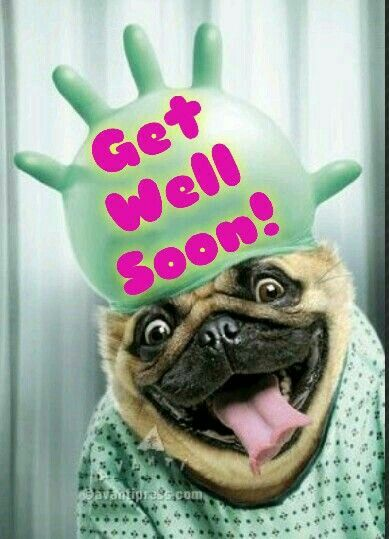 Get Well Soon Funny Animals Cute Animals