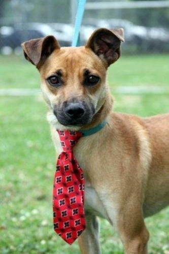 Randy Fox Terrier Dog Beaumont Tx Fox Terrier Terrier