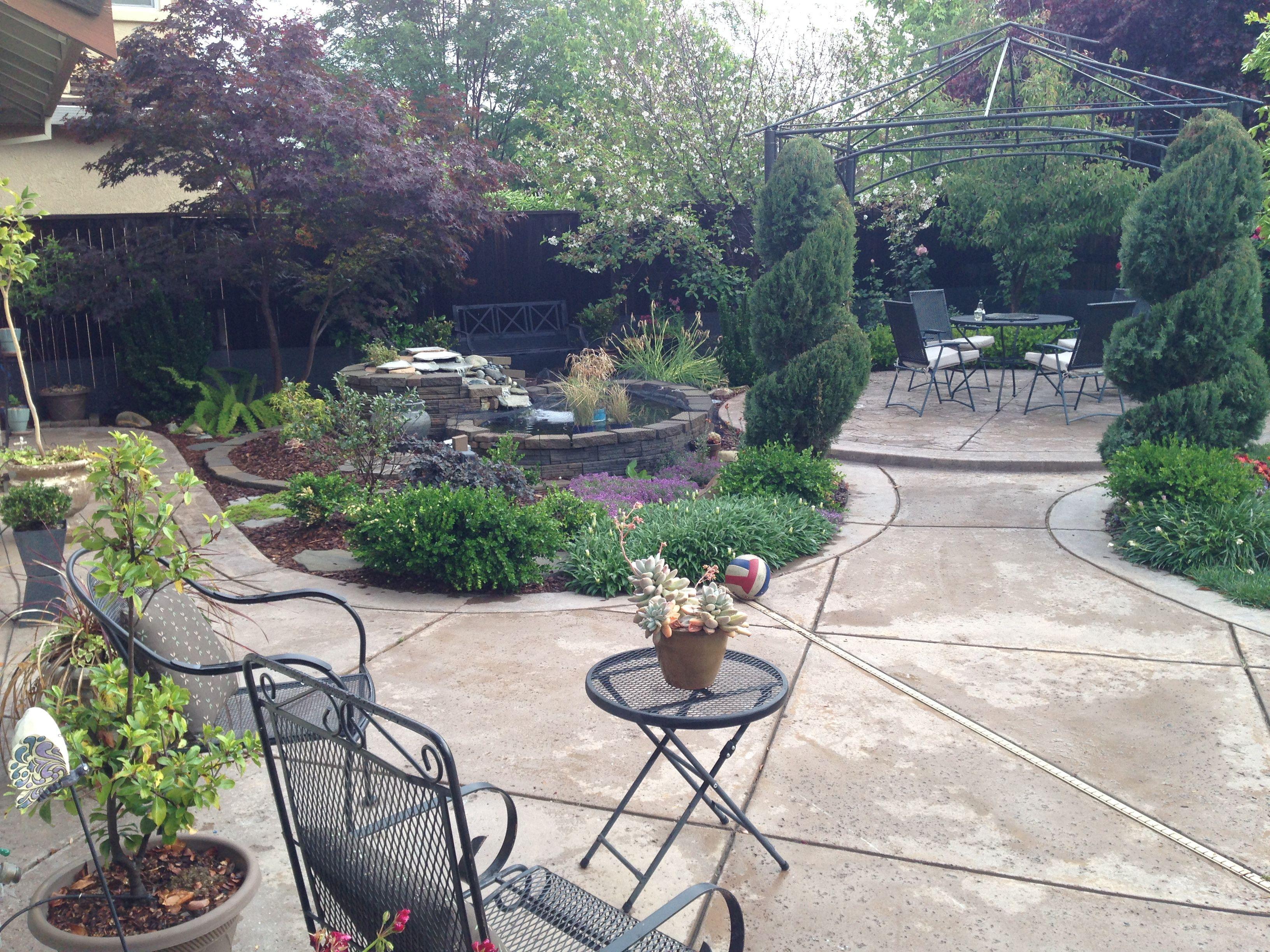 our backyard after a wonderful night of rain around sacramento
