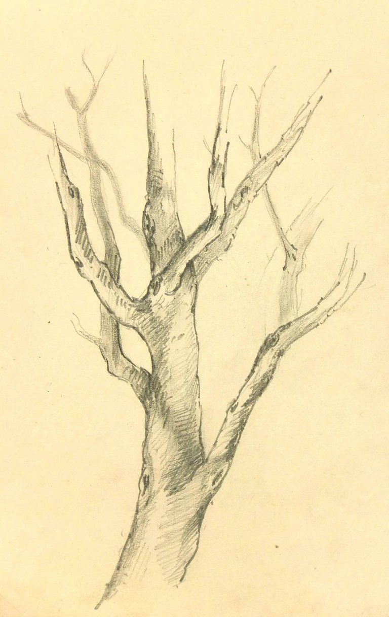 Unknown - French Pencil Drawing of Tree
