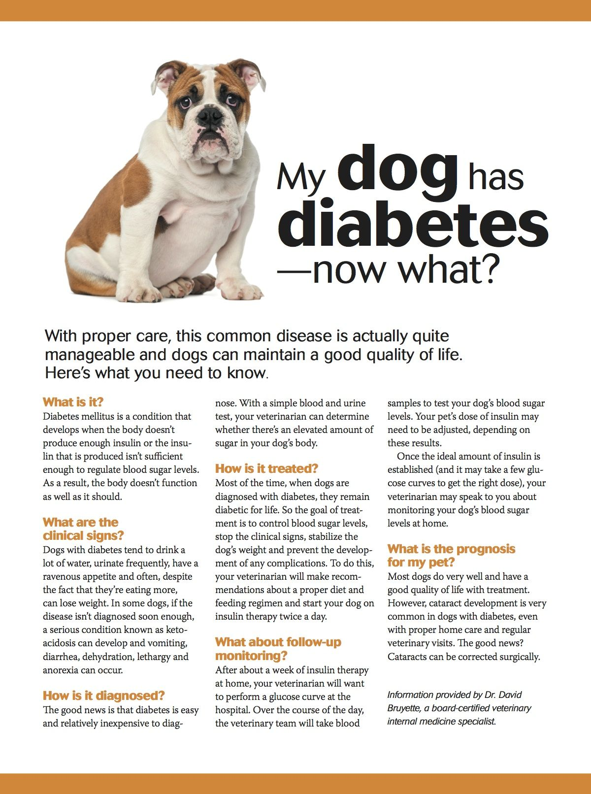 My dog has diabetes now what? pets pethealth