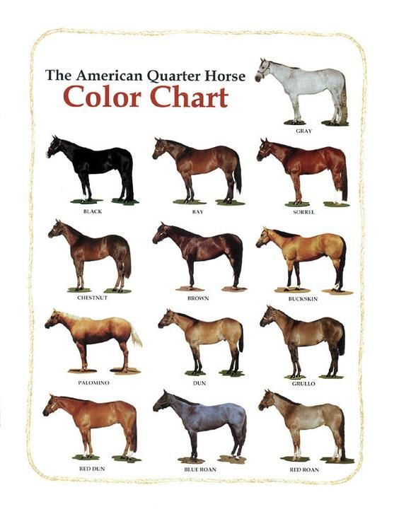 Horse Colors List With Pictures