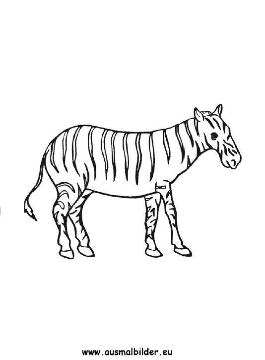 ausmalbild zebra zum ausmalen ausmalbilder