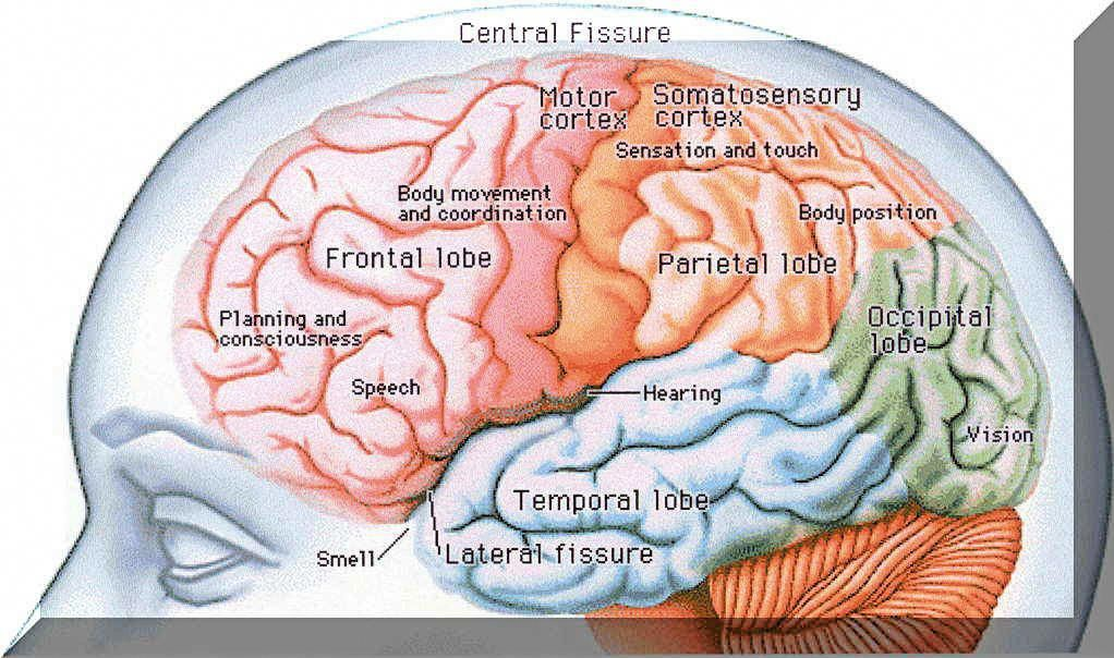 how to improve human memory power