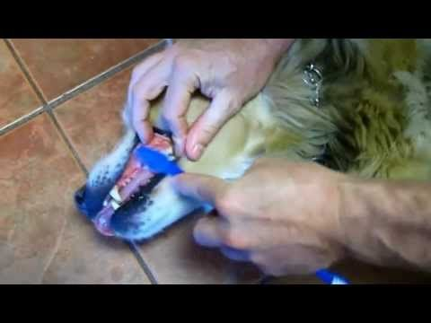 How to Brush Dogs' Teeth | Step by Step Guide | King West ...