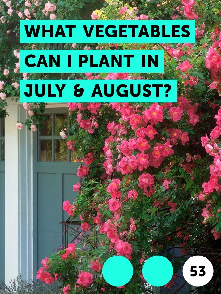 What Vegetables Can I Plant In July August Plants 400 x 300