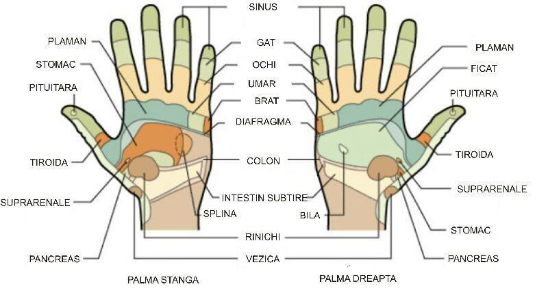 Incaltaminte five fingers VIBRAM EL-X Khaki/Coyote - HobbyMall - Incaltaminte fitness