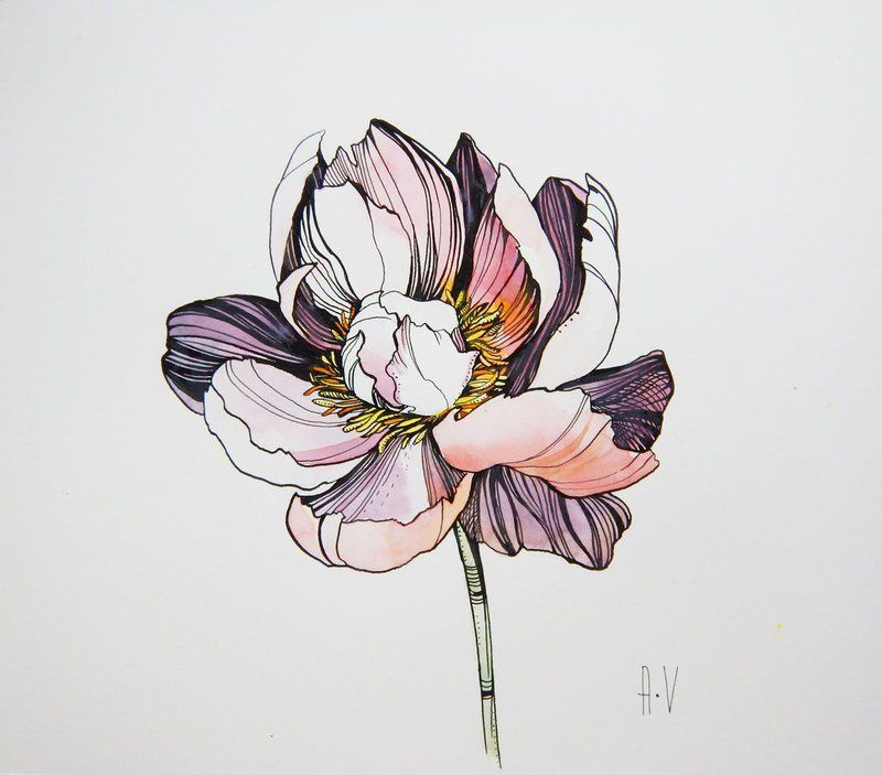 Peony (2019) Ink drawing by Alla Vlaskina