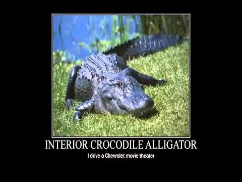 Interior Crocodile Alligator 10 Hours Crocodile Funny Animal