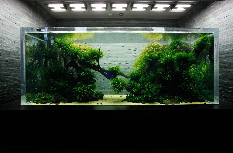 Saltwater Aquarium, Aquarium Ideas, Aquatic Plants, Aquascaping, Aquariums,  Fish Tanks, Underwater, Tower, Zen